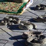 Serpientes en la Plaza Jemaa El Fna de Marrakech - Marruecos