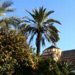Patio de los Naranjos en la Mezquita Catedral de Córdoba