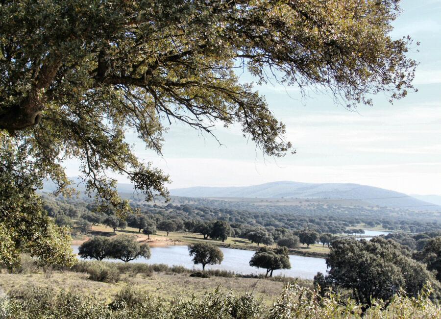 Paisajes de dehesa extremeña junto al parque nacional de Monfrague en Extremadura