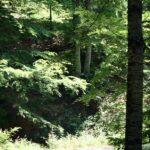 Pista forestal en la Selva de Irati de los Pirineos de Navarra