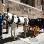 Calesas en los aledaños de la catedral de Málaga
