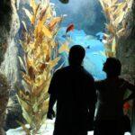 Oceanario en el Parque de las Naciones de Lisboa