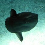 Variedad de especies marinas en el gran acuario del Oceanario de Lisboa