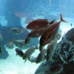 Gran variedad de especies marinas en el Oceanario de Lisboa