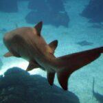 Tiburones en el Oceanario de Lisboa