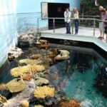 Diversidad de hábitats en el Oceanario de Lisboa