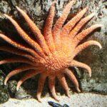 Hábitat de corales en el Oceanario de Lisboa