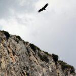 Sobrevuelo de aves rapaces en la Foz de Lumbier en Navarra