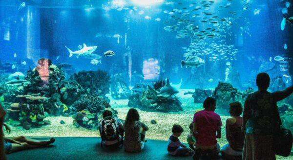 Gran acuario del Oceanario de Lisboa