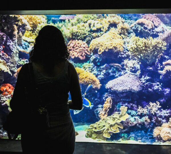 Corales en el Oceanario de Lisboa en Portugal