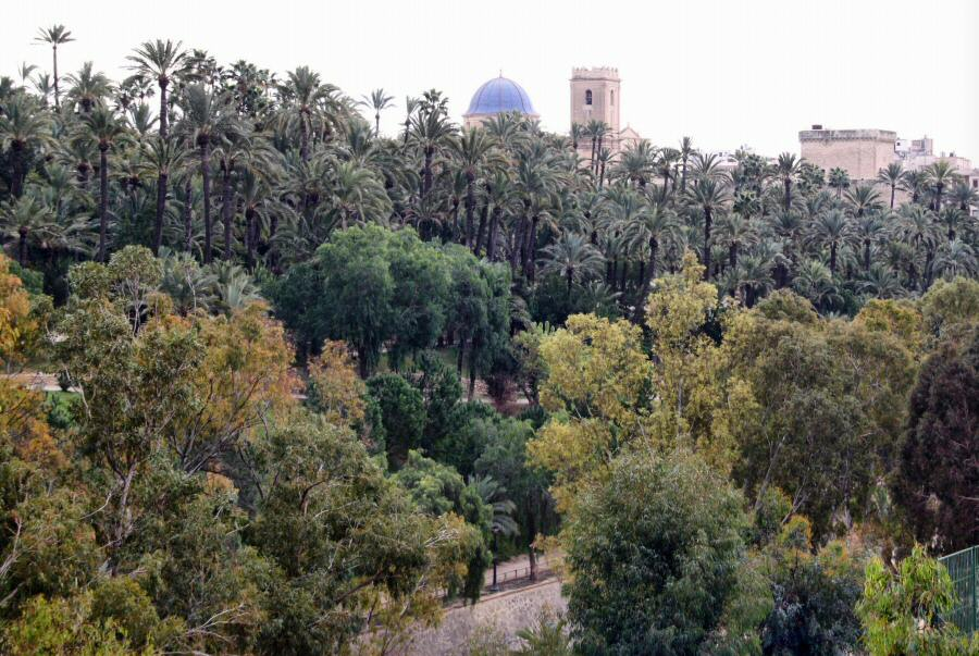 Parque Municipal del Palmeral de Elche