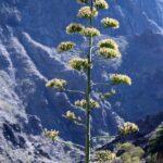 Rincón del Barranco de Masca en el parque de Teno en Tenerife