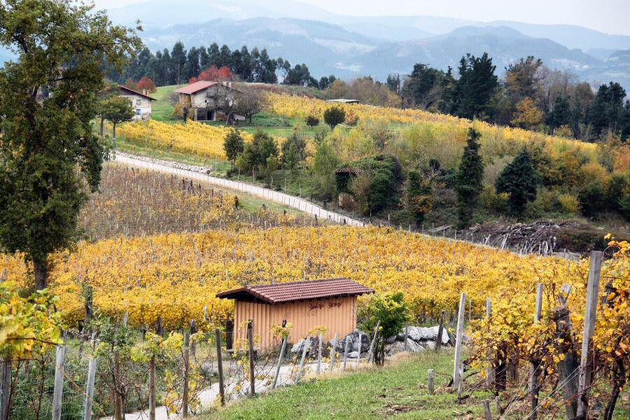 Viñedos de Bodegas Berroja en Urdaibai en Vizcaya