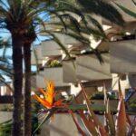 Jardines del Hotel Barceló Corralejo Bay en Fuerteventura
