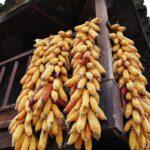 Maiz en un hórreo panera de Bueño en Asturias