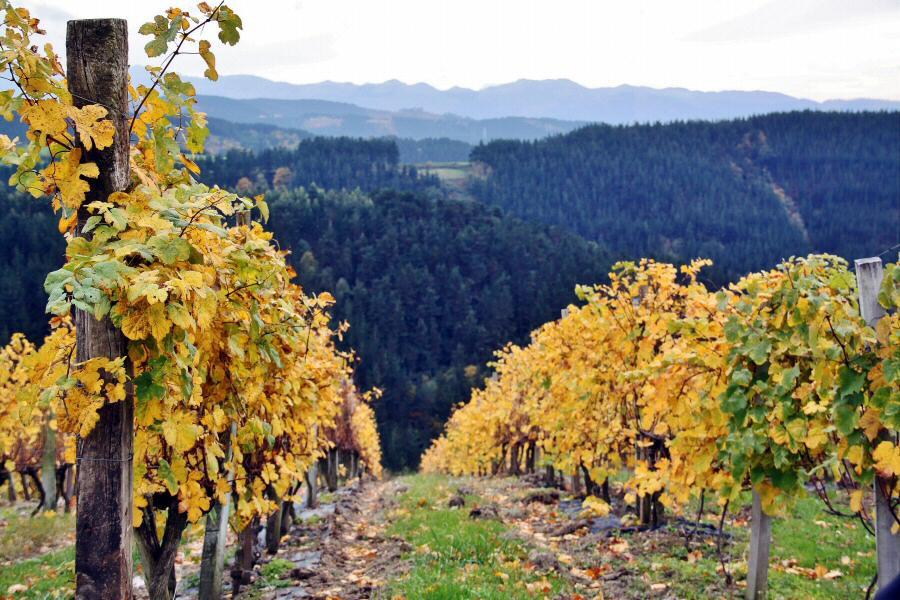 Paisaje de viñedos en Urdaibai en Euskadi