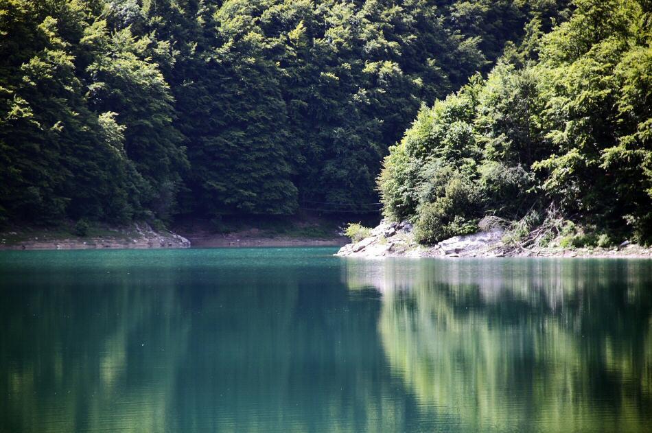 Selva de Irati en los Pirineos de Navarra