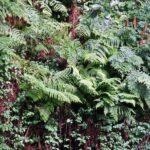 Frondosa vegatación en la Garganta de las Nogaledas del Valle del Jerte