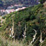 Flores en la ruta de senderismo de la Garganta de las Nogaledas