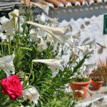 Rincón de Fataga en interior de Gran Canaria