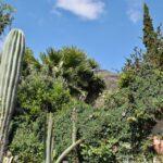 Vegetación tropical en Fataga en interior de Gran Canaria