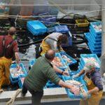 Descarga de pescado en el puerto de San Carlos de la Rápita en Tarragona