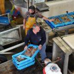 Entrada de pescado para subasta en la lonja del puerto de San Carlos de la Rápita