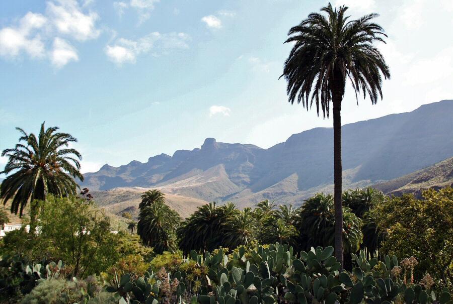 Palmeral en el oasis de Arteara en Gran Canaria