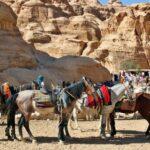 Caballos para la visita de Petra en Jordania