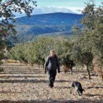Búsqueda de trufas negras con perro en el Alto Maestrazgo de Castellón