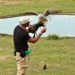 Exhibición de aves rapaces en el parque de Cabárceno en Cantabria
