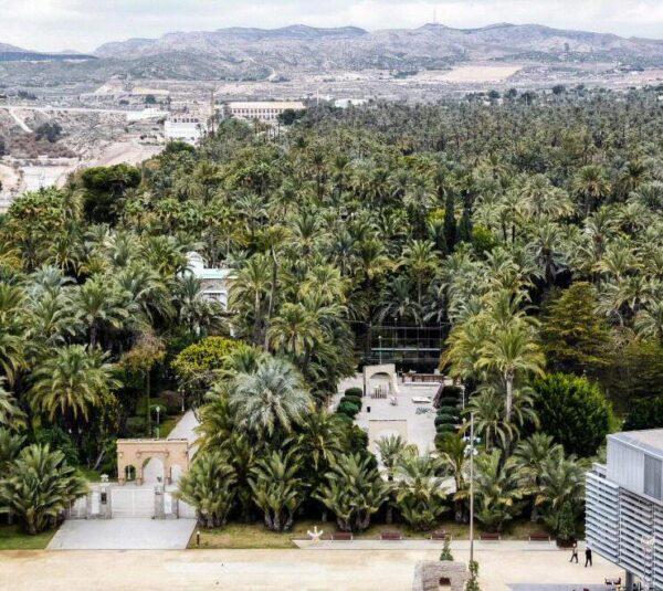 Vistas panorámicas del Palmeral de Elche desde la Torre de la Basílica de Santa María
