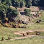 Recinto de los elefantes en Cabárceno en Cantabria