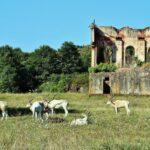 Addax en el parque de la naturaleza de Cabárceno en Cantabria