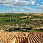 Panorámica de viñedos desde el hotel La Estacada en Tarancón en Cuenca