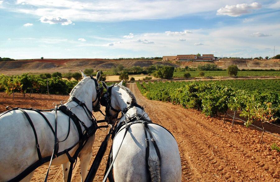Paseo en carruaje de caballos por los viñedos de Finca La Estacada