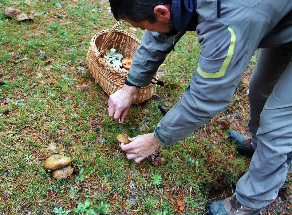 Ruta micológica en Gredos en Avila