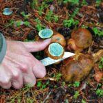 Setas en la ruta micológica en Gredos
