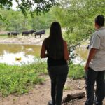 Avistamiento de búfalos desde el lodge Cheetah Plains en parque Kruger