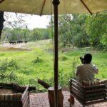 Fotografiando búfalos desde el lodge del parque Kruger