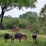 Ñus en el safari en el parque Kruger en Sudáfrica