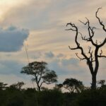 Atardecer en el parque Kruger en Sudáfrica