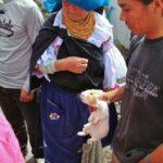 Mercado de animales de Otavalo cerca de Quito en Ecuador