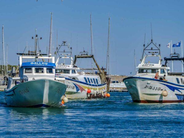 Llegada de los barcos de pesca al puerto de Cambrils