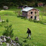 Brañagallones en el parque de Redes en Asturias