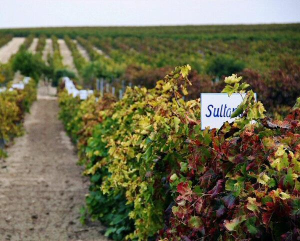 Enoturismo en viñedos en Jerez de la Frontera en Cádiz