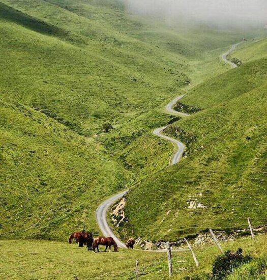 Monte Aezkoa en Irati de los Pirineos de Navarra