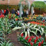 Floralias de Gante, exposición de arte floral