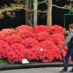 Exposición de arte floral Floralias de Gante en Citadelpark