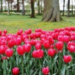 Floralia en el chateau de Grand-Bigard en Bruselas